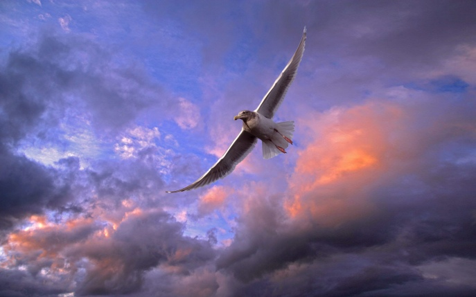 wonderful-flying-bird-wallpaper-1920x1200-1010065