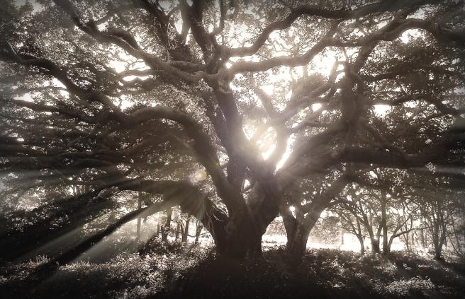 The-Big-Tree-1200