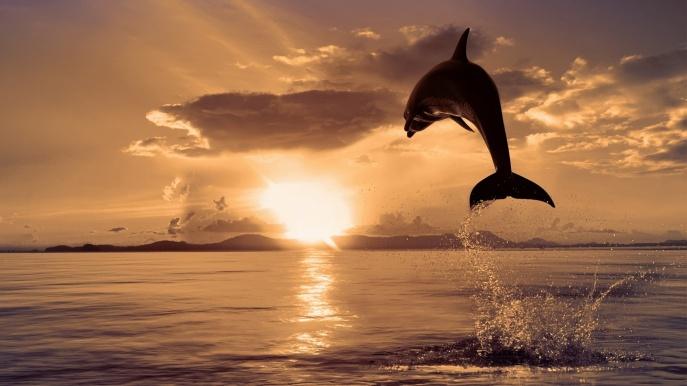 Dolphin-Jump-Sunrise-1920x1080