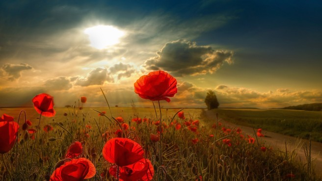 Red-Flowers-on-Brown-Ground-Blue-Sky-and-Sunlight-Flowers-Draw-Incredible-Attention-HD-Natural-Scenery-Wallpaper