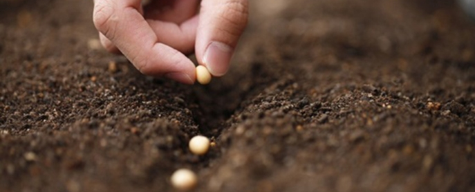 viii-curso-de-capacitacao-de-analista-de-sementes-destaque